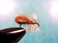 Bubble Wing Caddis